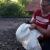 31.05.2019 - Tierrettung: Krähe im Gäste WC